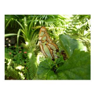 Schmetterling in der tropischen postkarte