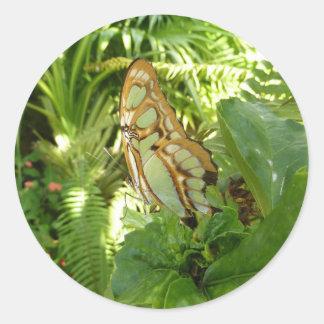 Schmetterling in der tropischen runder aufkleber