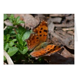 Schmetterling Karte