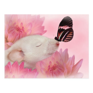 Schmetterling küsst Postkarte