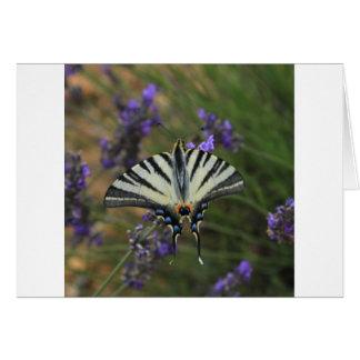 Schmetterling - Papilio machaon auf blühendem Karte