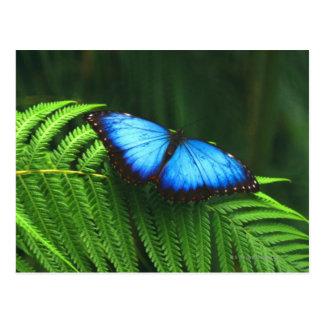 Schmetterling Postkarten
