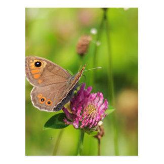 Schmetterling Postkarte