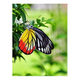 Schmetterling - Postkarten
