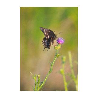 Schmetterling u. schottische Distel-Garten-Szene Leinwanddruck
