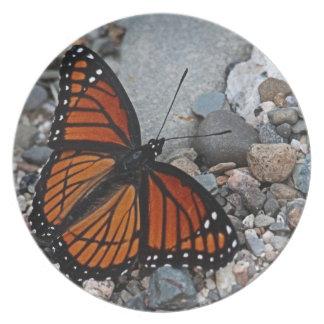 Schmetterling und Steine Melaminteller