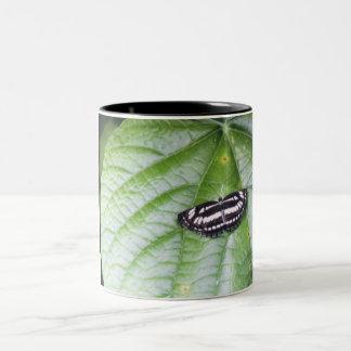 Schmetterling Zebra tropisch Zweifarbige Tasse
