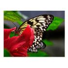 Schmetterlinge Postkarte