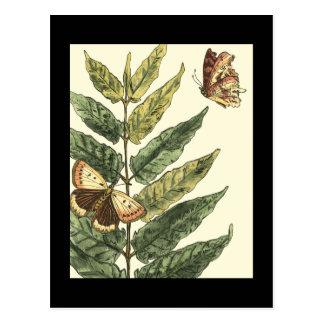 Schmetterlinge u. Blätter mit schwarzem Rahmen Postkarte
