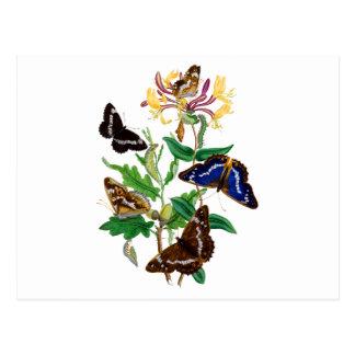 Schmetterlinge und rotes Geißblatt Postkarte