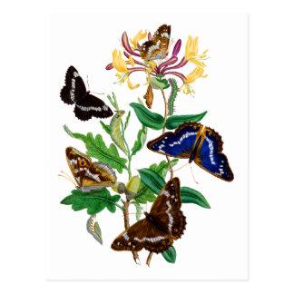 Schmetterlinge und rotes Geißblatt Postkarten