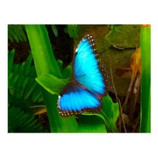 Schmetterlings-Blau-nahes hohes Postkarte