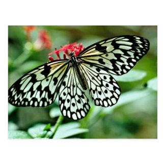 Schmetterlings-Blumen Postkarte