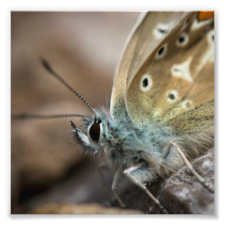 Schmetterlings-Druck Fotodruck