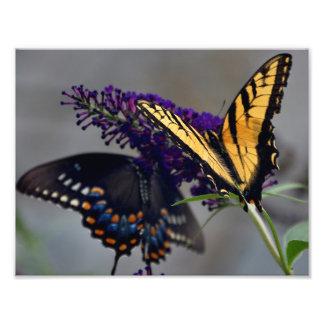 Schmetterlings-Foto Fotodruck
