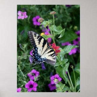 Schmetterlings-Garten Poster