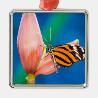 Schmetterlings-Landung auf lila Blume Silbernes Ornament