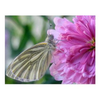 Schmetterlings-Postkarte Postkarte