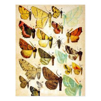 Schmetterlings-Sammlung Postkarte