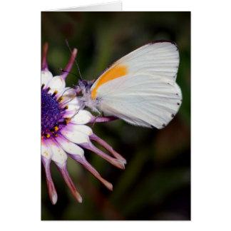 Schmetterlingsgeschenke Karte