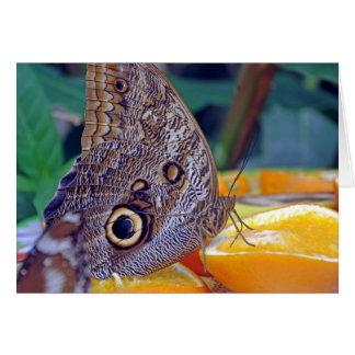 Schmetterlingsnahaufnahmekarte Karte