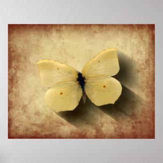 Schmutz-gelber Schmetterling mit Schatten Poster