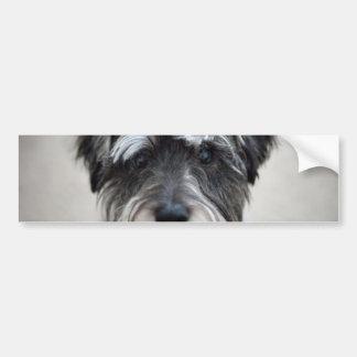 Schnauzer-HundeAutoaufkleber Autoaufkleber