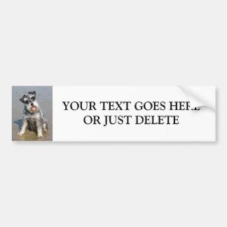 Schnauzerminiaturhundeniedliches Foto an der Autoaufkleber