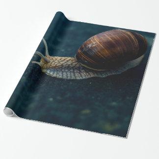 Schnecke auf blauer Nahaufnahme, Geschenkpapier