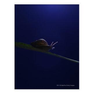 Schnecke, die auf ein Glied erlischt Postkarte