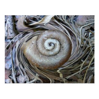 Schnecke-Muschel-Spirale-Postkarte Postkarte