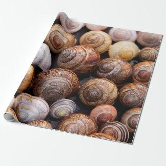 Schnecke-Muscheln Geschenkpapier