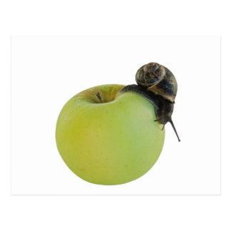Schnecke und Apfel Postkarte