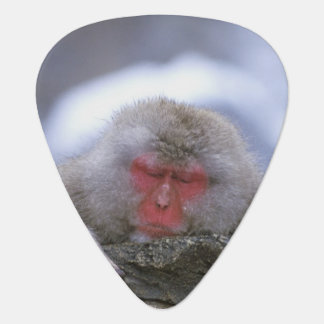Schnee-Affe-Mutter u. Kind, Jigokudani, Nagano, Plektron