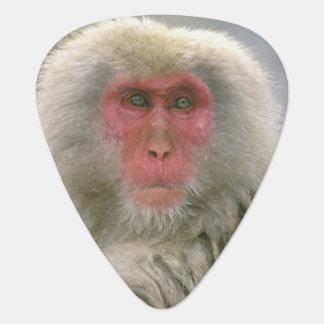 Schnee-Affe-Paare, japanischer Macaque, Plektron