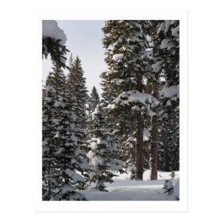 Schnee auf dem MESA Postkarte