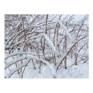 Schnee auf einem Himbeerflecken --- Postkarte
