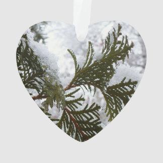 Schnee auf Immergrün verzweigt sich Ornament