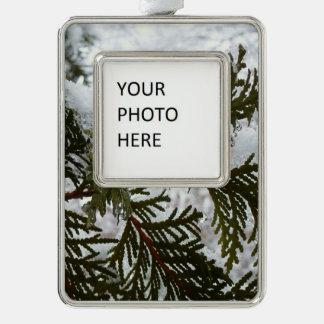 Schnee auf Immergrün verzweigt sich Rahmen-Ornament Silber