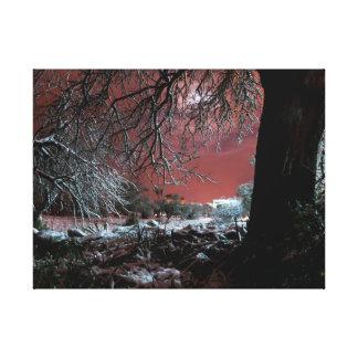 Schnee auf Olivenbäumen Leinwanddruck