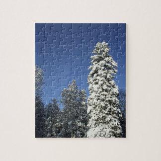 Schnee bedeckte Kiefer Puzzle