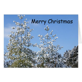 Schnee beladene Kiefern, frohe Weihnachten Karte