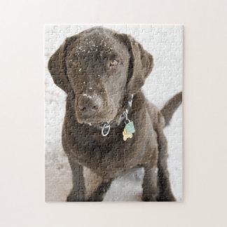 Schnee besprühte Schokoladen-Labrador-Fotografie Puzzle