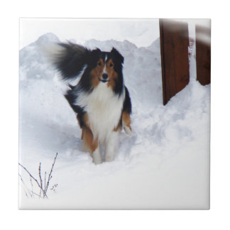 Schnee-Collie Fliese