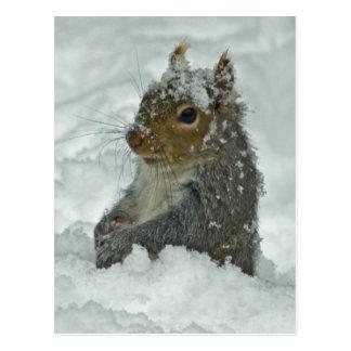 Schnee-Eichhörnchen-Postkarte Postkarte