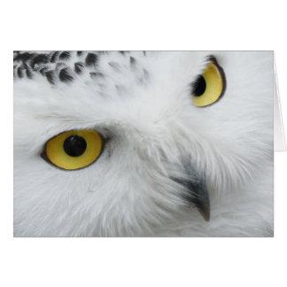 Schnee-Eulen-Augen Karte