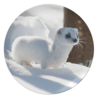 Schnee-Frettchen Melaminteller