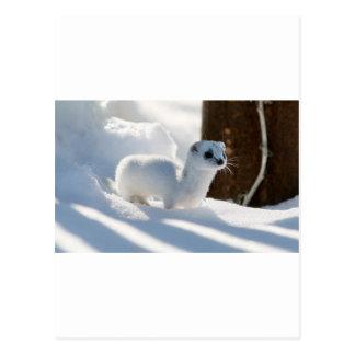 Schnee-Frettchen Postkarte