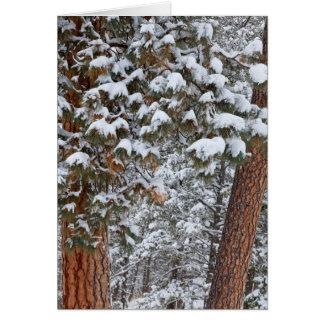 Schnee füllt die Äste von ponderosa Kiefern Karte