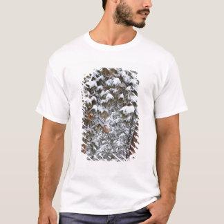 Schnee füllt die Äste von ponderosa Kiefern T-Shirt